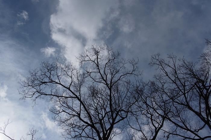 冬の落葉樹_e0276411_22514248.jpg