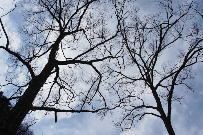冬の落葉樹_e0276411_22514991.jpg