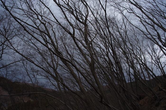 冬の落葉樹_e0276411_22515633.jpg