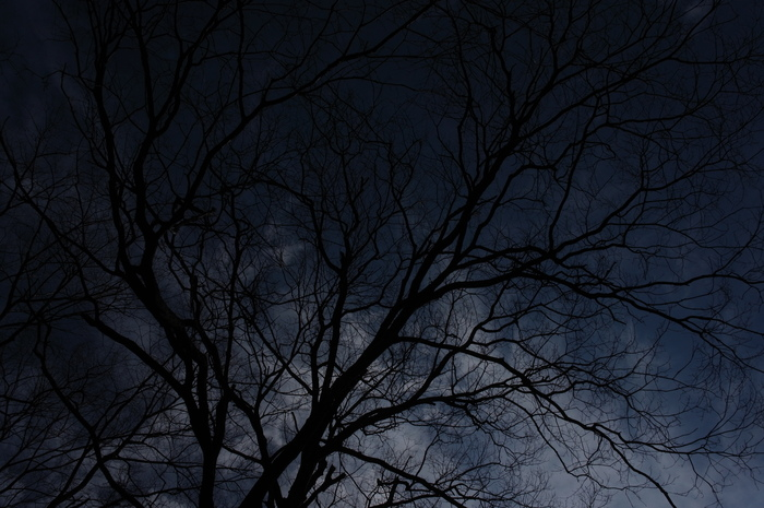 冬の落葉樹_e0276411_2252134.jpg
