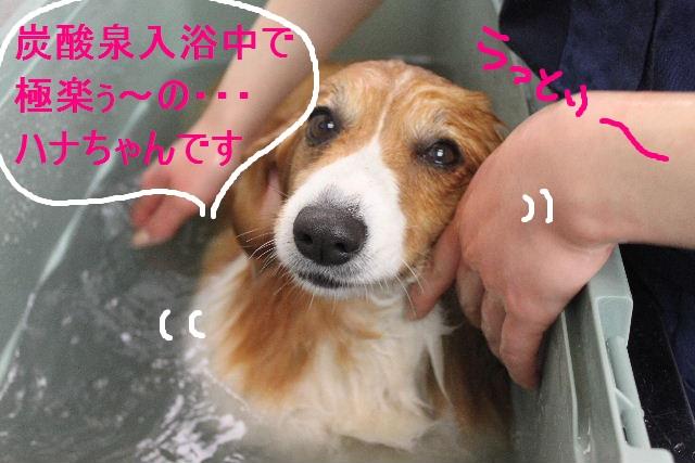 b0130018_15417.jpg