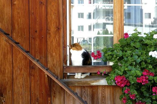ネコ専用の階段_f0165030_1474219.jpg