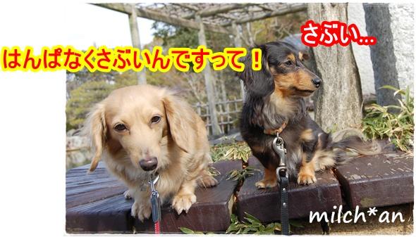 b0115642_22132640.jpg