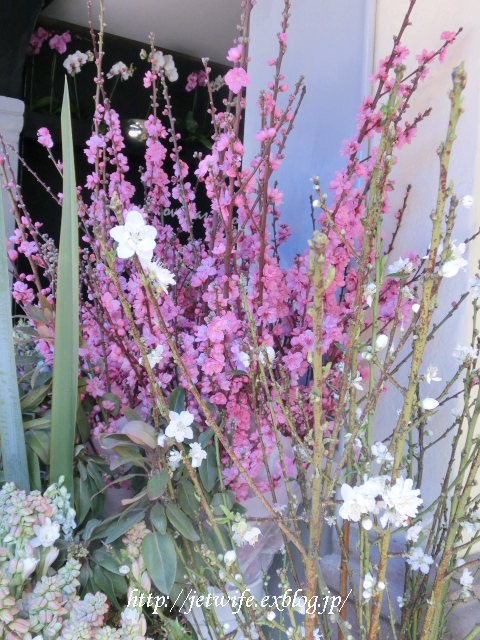 桃と桜 一年中春!_a0254243_1243066.jpg