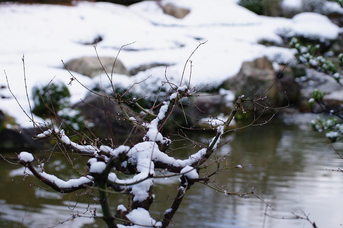 雪の退蔵院..._f0152550_19224998.jpg