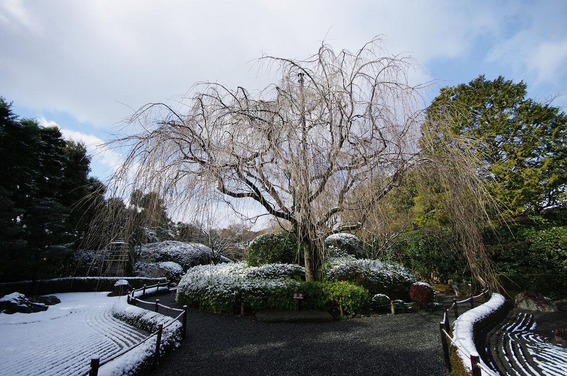 雪の退蔵院..._f0152550_19365171.jpg