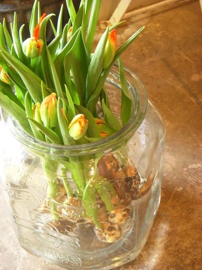 春のお花の愉しみかた。。。_a0229658_12535672.jpg