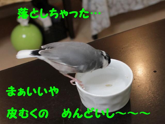 b0158061_20325490.jpg