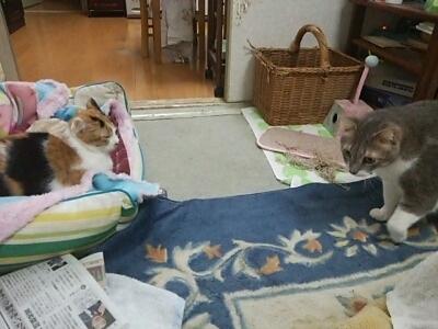 猫っ達_b0112380_21505893.jpg