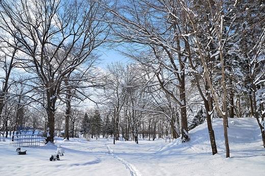 2014年1月27日(月):雪の後の晴天[中標津町郷土館]_e0062415_1913418.jpg