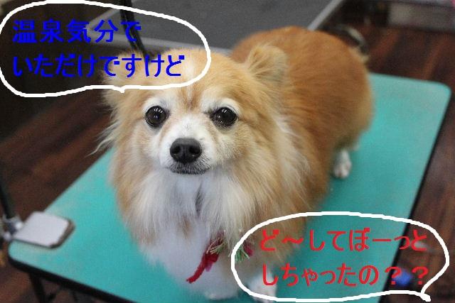 b0130018_2236512.jpg