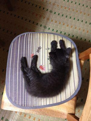 2013年6月の猫_f0193425_758433.jpg
