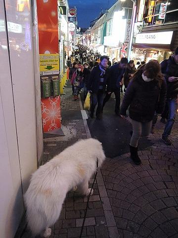 誕生日のお散歩_c0062832_7124795.jpg