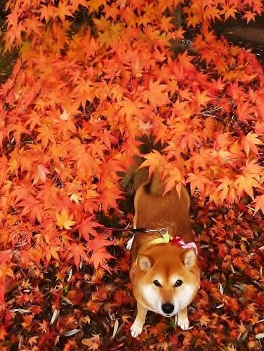 愛犬_b0314043_16575454.jpg