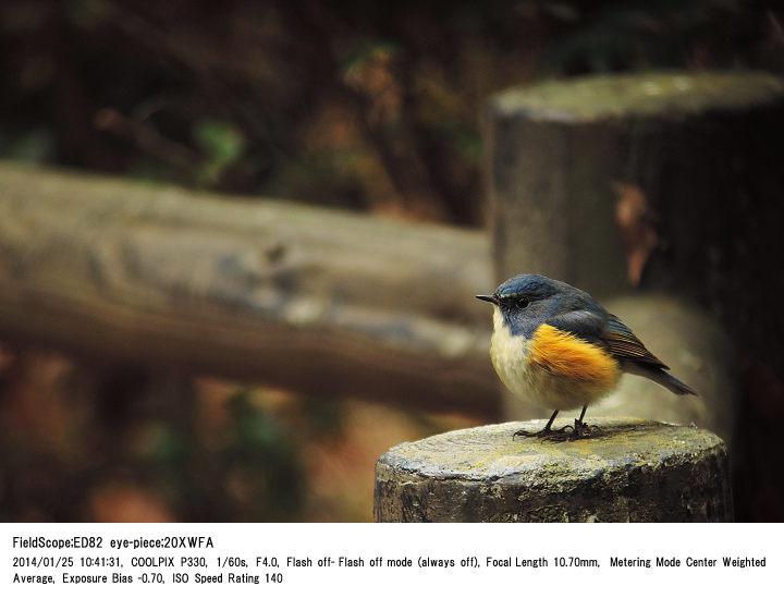 2014.1.25(1) 手賀の丘公園_c0062451_2057528.jpg