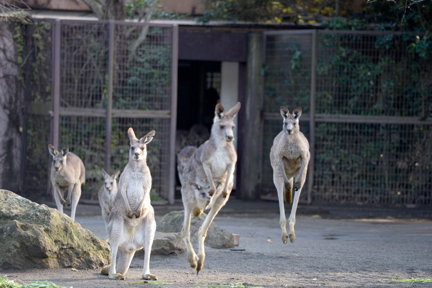 朝の動物園_b0023856_6535917.jpg