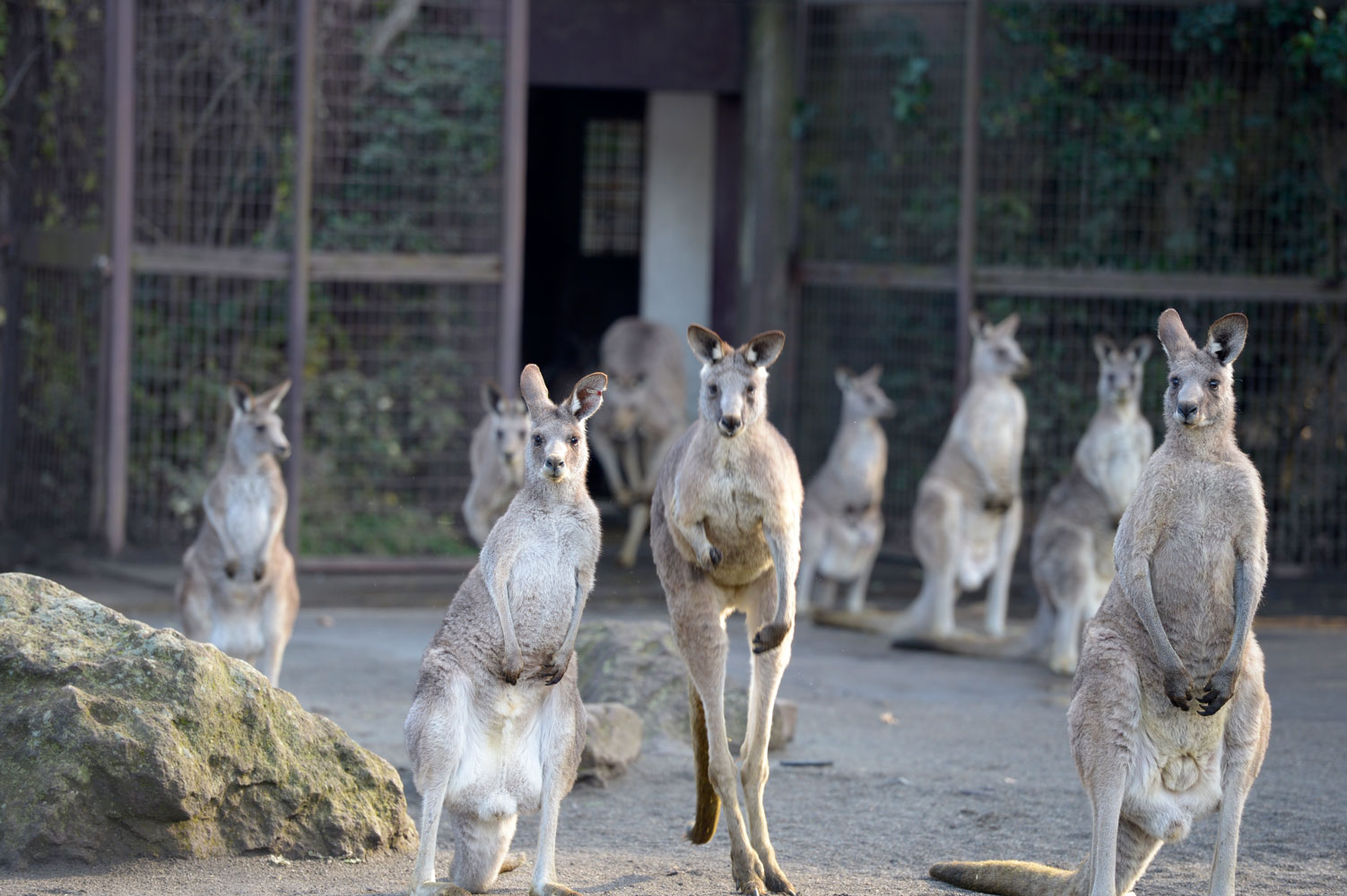 朝の動物園_b0023856_6541421.jpg
