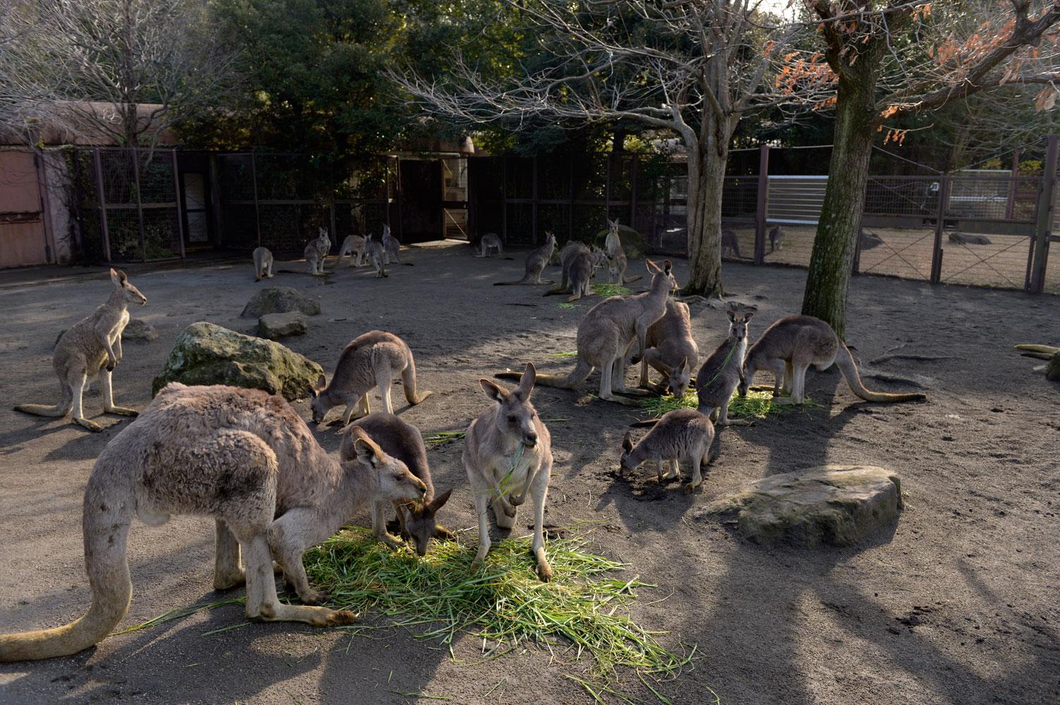 朝の動物園_b0023856_654304.jpg