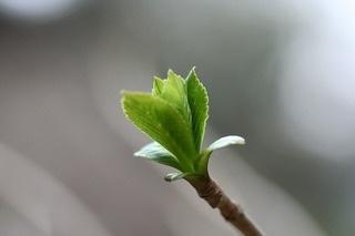 ー新しい芽ー_d0237757_21282020.jpg