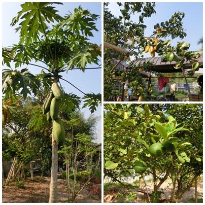 Baan Chaiwong Resort_a0199979_18482121.jpg