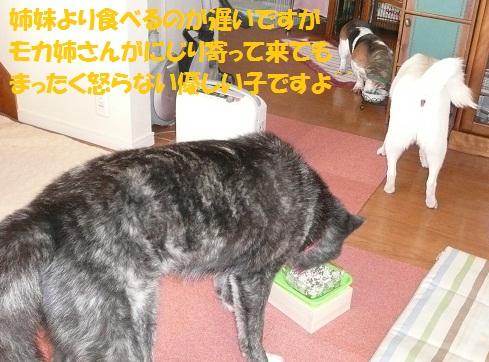 f0121712_8165335.jpg