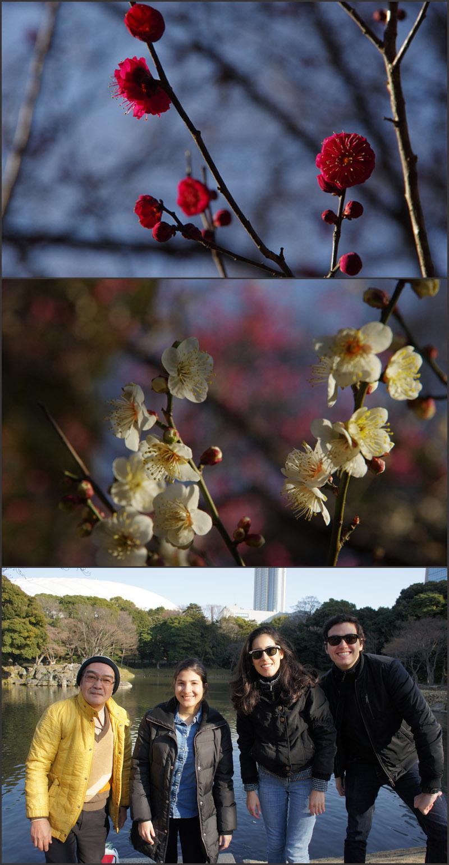 梅いろいろ(小石川後楽園)_b0019313_17541441.jpg