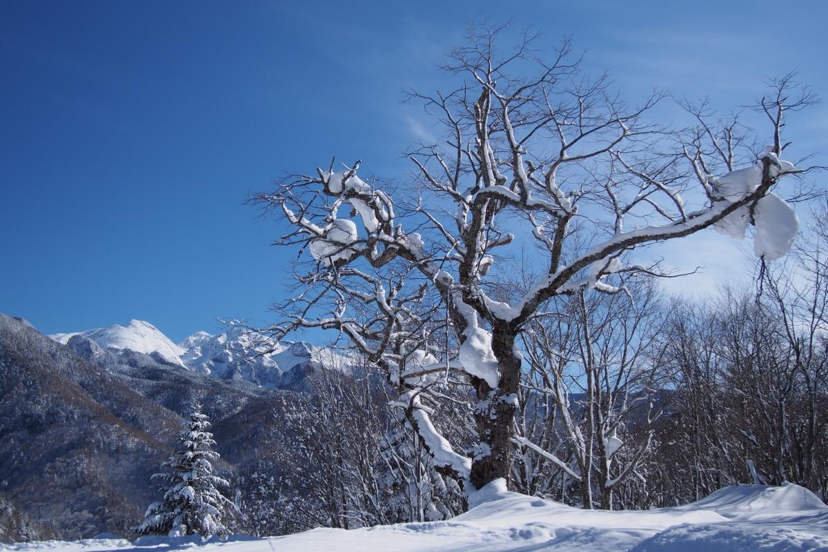 雪が好き、でも晴れが好き_a0203733_101959100.jpg