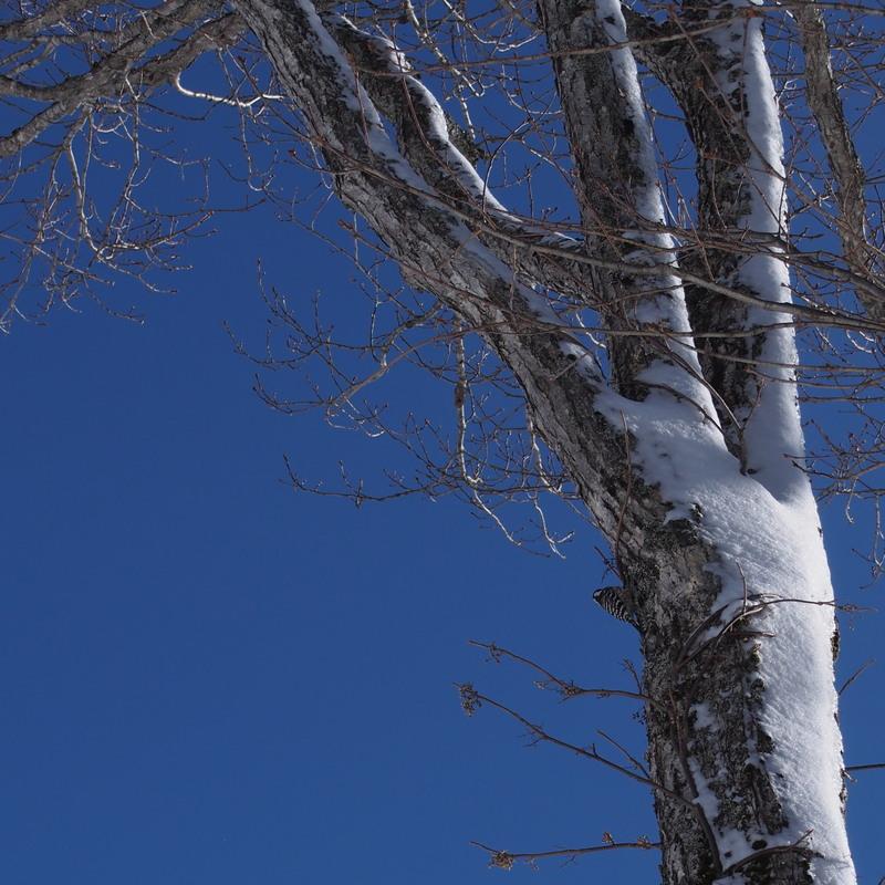 雪が好き、でも晴れが好き_a0203733_10202254.jpg
