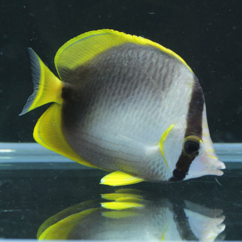 海水魚&サンゴ入荷!!_d0221436_22395054.jpg