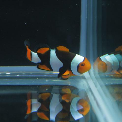 海水魚&サンゴ入荷!!_d0221436_2241278.jpg