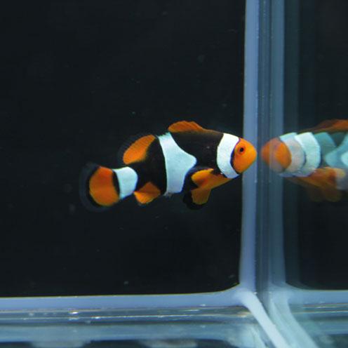 海水魚&サンゴ入荷!!_d0221436_22431590.jpg