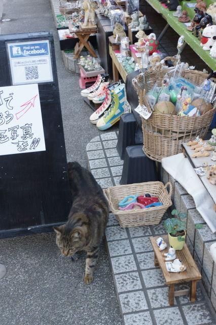 江の島で出会った猫さんたち_a0257652_1782685.jpg