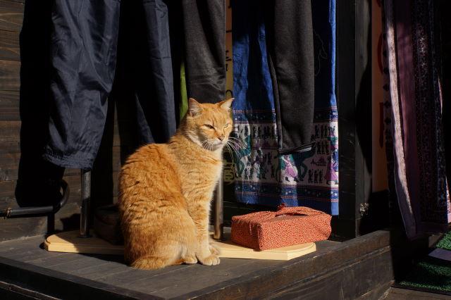 江の島で出会った猫さんたち_a0257652_1784582.jpg