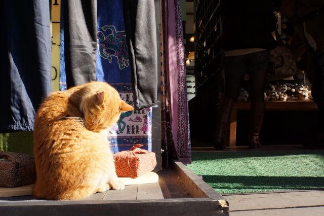 江の島で出会った猫さんたち_a0257652_179040.jpg
