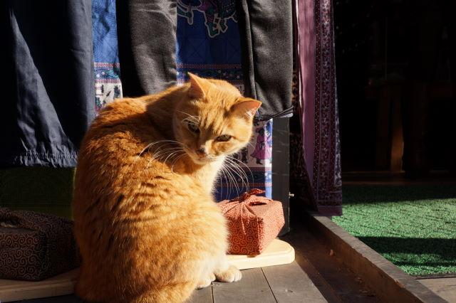 江の島で出会った猫さんたち_a0257652_1791422.jpg