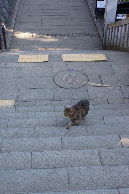 江の島で出会った猫さんたち_a0257652_1792829.jpg