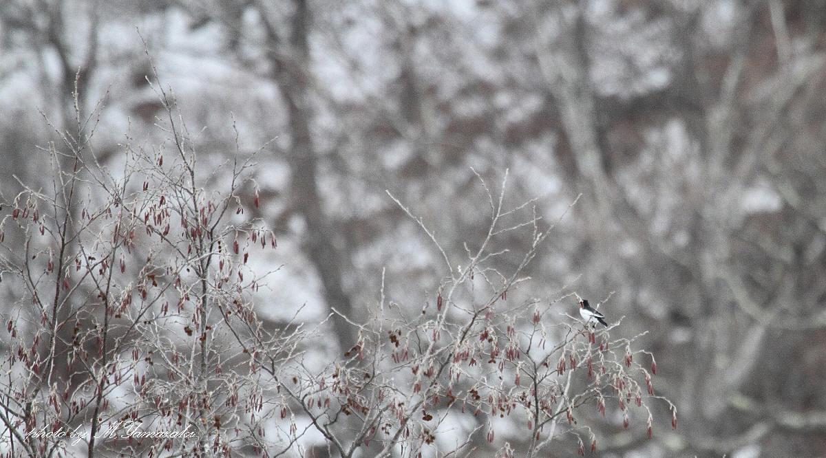 冬色キバシリ_c0217255_1828188.jpg