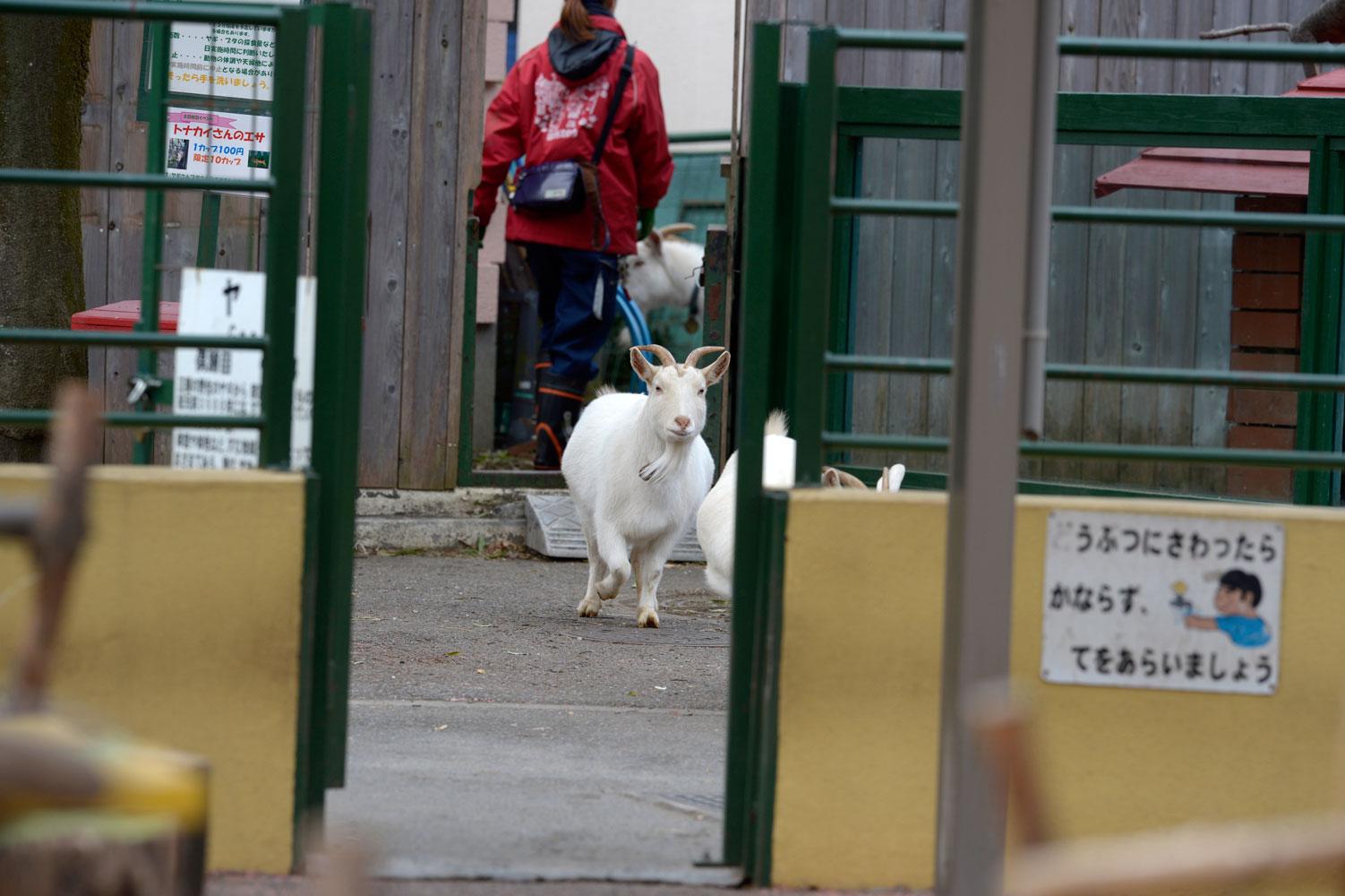 朝の動物園その2_b0023856_6505629.jpg