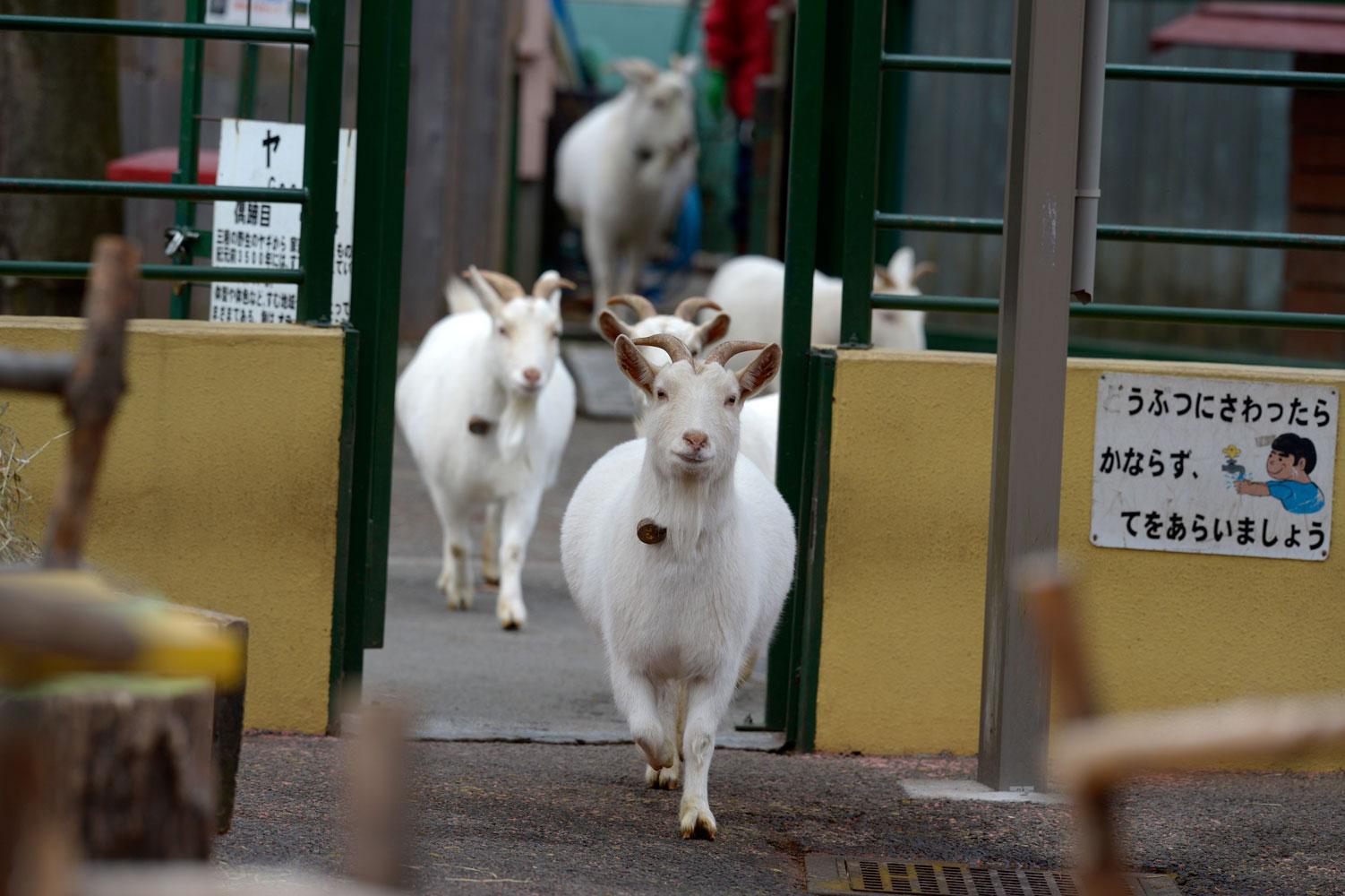 朝の動物園その2_b0023856_6513975.jpg