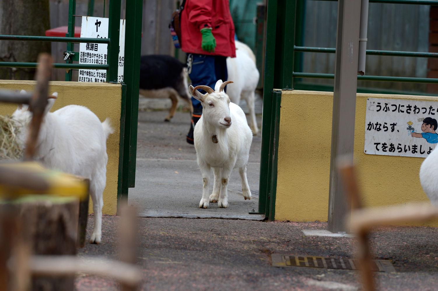 朝の動物園その2_b0023856_652084.jpg