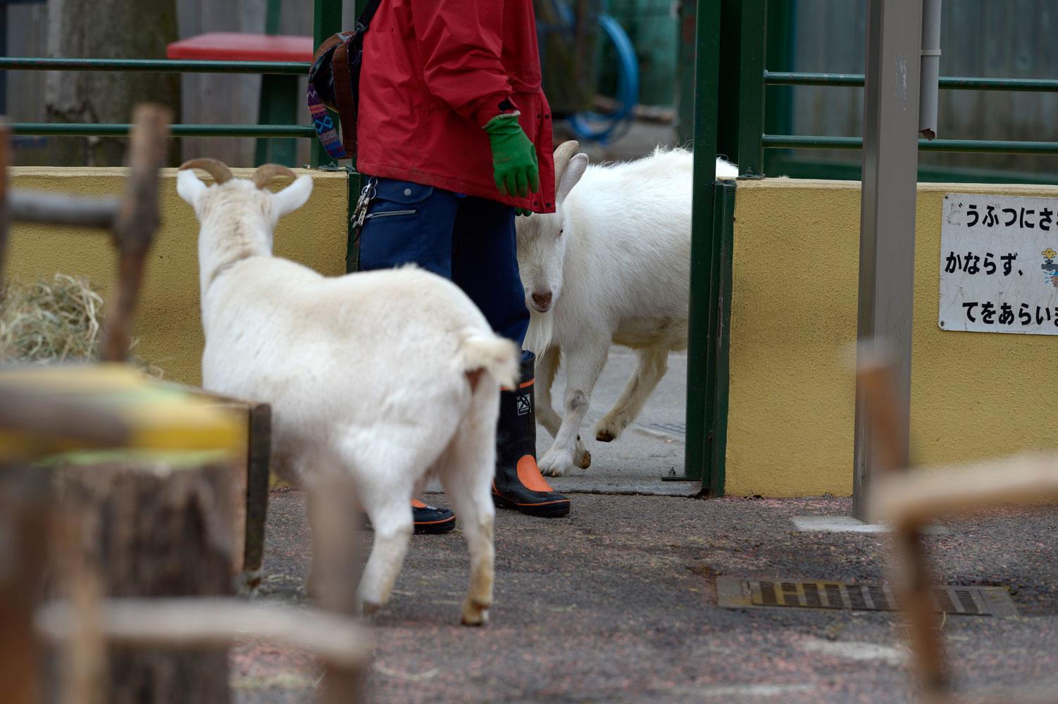 朝の動物園その2_b0023856_6522970.jpg