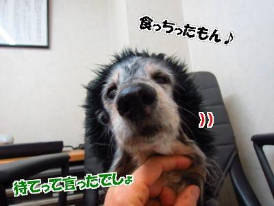 d0020869_142831.jpg