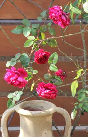 ◆フロントガーデンのバラたち_e0154682_23154312.jpg