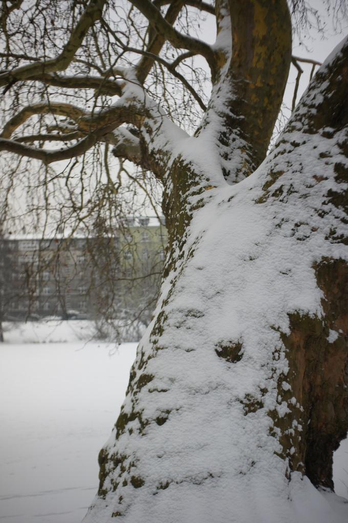 雪のベルリン。_c0180686_23074425.jpg