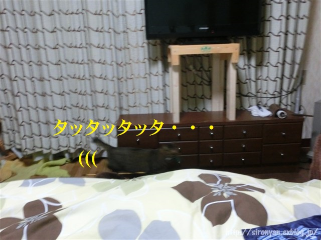 a0159490_11312654.jpg
