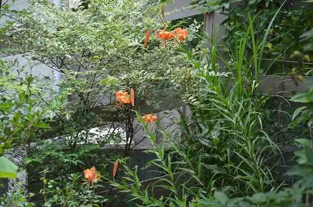 2013年 7月の庭…_c0124100_0565377.jpg