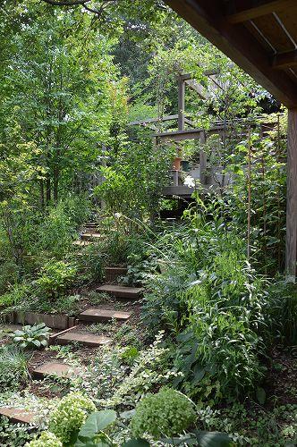 2013年 7月の庭…_c0124100_0571019.jpg