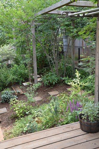2013年 7月の庭…_c0124100_057197.jpg