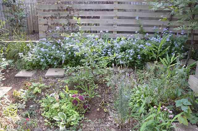 2013年 8-9月の庭…_c0124100_23504278.jpg
