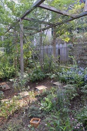 2013年 8-9月の庭…_c0124100_23505086.jpg